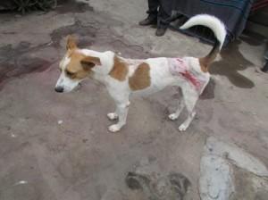 Dog - after 3